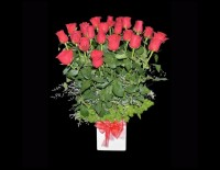 Pot of 24 Premium Red Roses